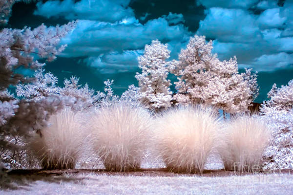 Infrared Bushes Art Print