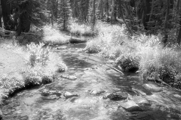 Photograph - Infrared Forest by Frank Lee Hawkins