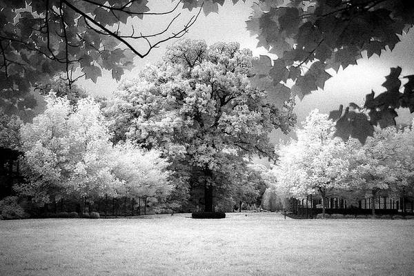Photograph - Infrared Majesty by Andrea Platt
