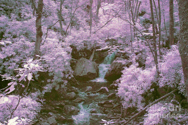 Wall Art - Photograph - Infrared Mountain Stream by Paul W Faust -  Impressions of Light