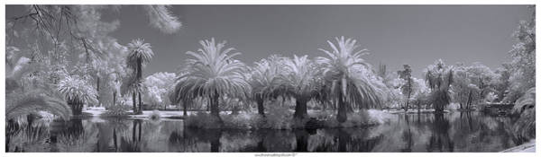 Photograph - Infrared On A Sunny Afternoon by Bruno Rosa