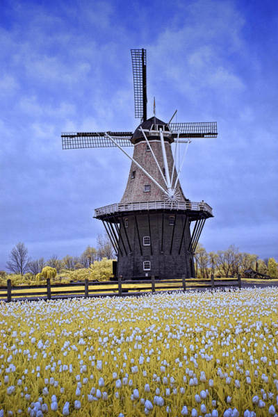 Photograph - Infrared Photo Of The Dezwaan Dutch Windmill On Windmill Island In Holland Michigan by Randall Nyhof