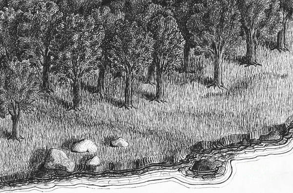 Beach Grass Drawing - Ink Drawing With Trees By A Lake. by Kerstin Ivarsson