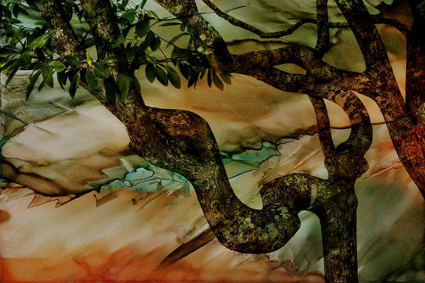 Flagler Beach Photograph - Inked Watercolor St Augustines Tree by Evie Carrier