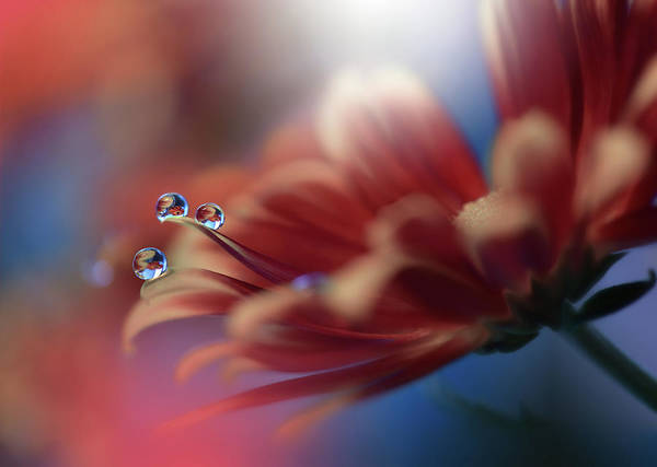 Red Flower Photograph - Inmost... by Juliana Nan