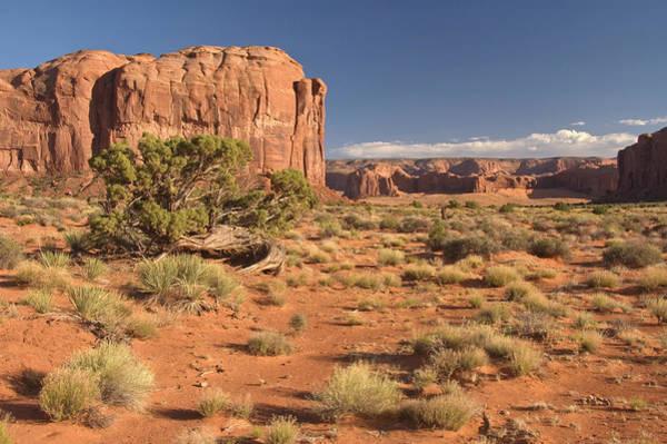 Toughness Photograph - Inner Canyon Landscape by John Elk