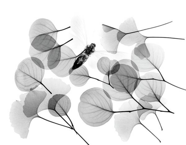 Wall Art - Photograph - Insect And Plant Leaves by Albert Koetsier X-ray