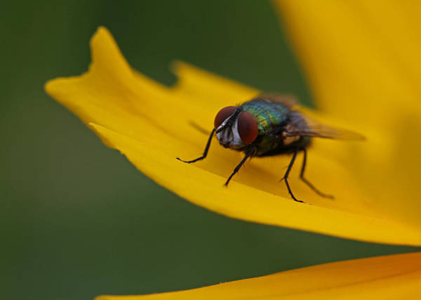 Photograph - Insect by Juergen Roth