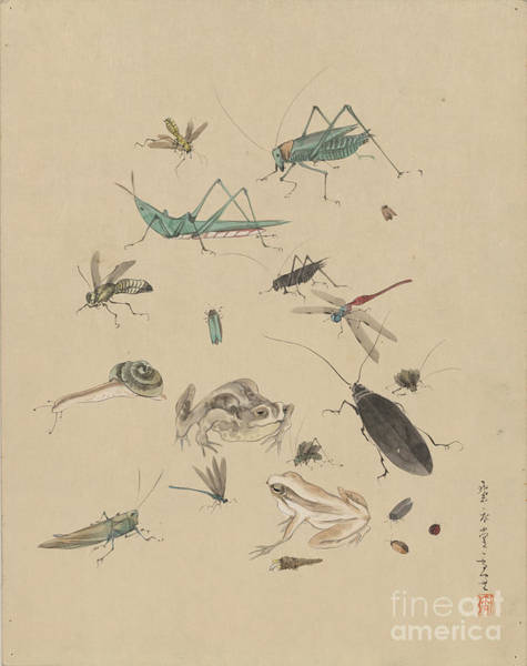 Photograph - Insects C1825 by Granger