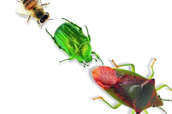 Wall Art - Photograph - Insects by Gombert, Sigrid