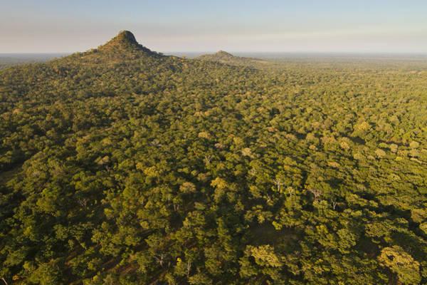 Photograph - Inselbergs Rising Above Gorongosa by Piotr Naskrecki