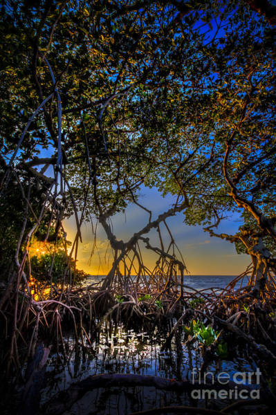 Palmetto Photograph - Inside Looking Out by Marvin Spates