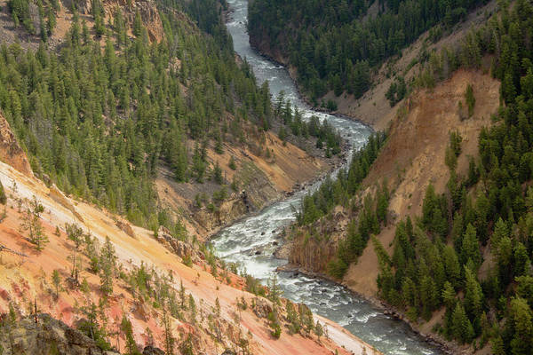 Yellowstone Canyon Photograph - Inspiration Point, Yellowstone River by Michel Hersen