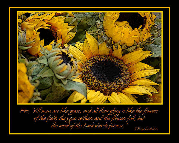 Photograph - Inspirational Sunflowers by Carolyn Marshall