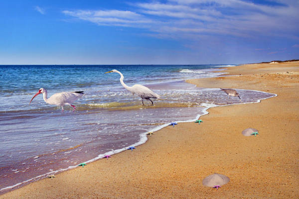 Shore Bird Digital Art - Inspiring Ibis Egret Sandpiper Starfish Sand Dollars  by Betsy Knapp