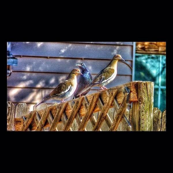 Grackle Photograph - #instasize #bird #grackle #dove #texas by J Z