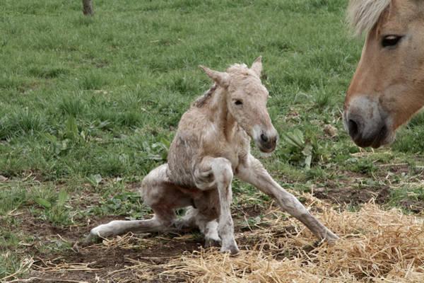 Foal Photograph - Instinct Two by Odd Jeppesen