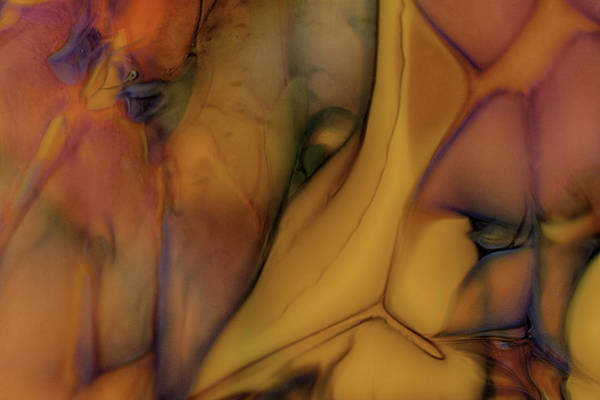 Photograph - Intensity In Glass by Omaste Witkowski