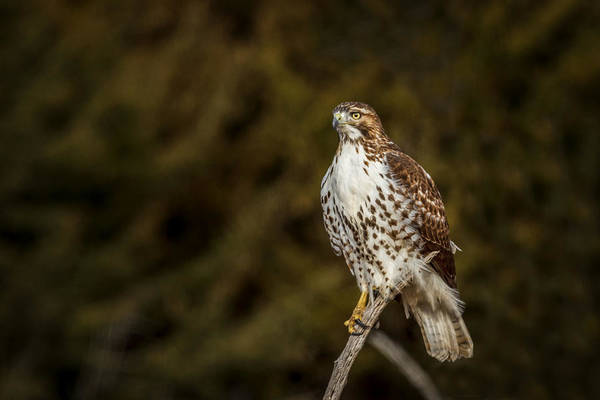Hawk Creek Photograph - Intensity by Scott Bean