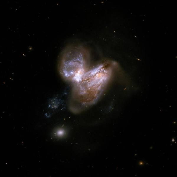 Interacting Galaxies Wall Art - Photograph - Interacting Galaxies Ngc 3690 And Ic 694 by Stsci/aura/hubble Collaboration/a. Evans (university Of Virginia, Charlottesville;nrao;stony Brook University)/nasa/ Science Photo Library