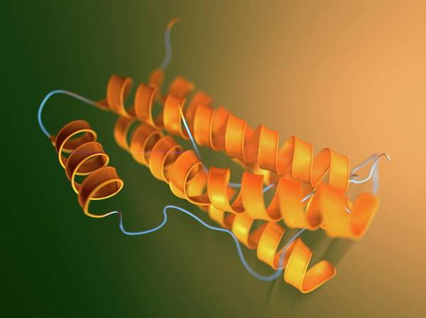 Interleukin-6 Molecular Model Art Print