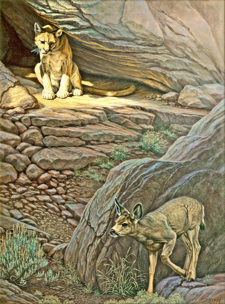 Lions Painting - Interruption-cougar And Fawn by Paul Krapf