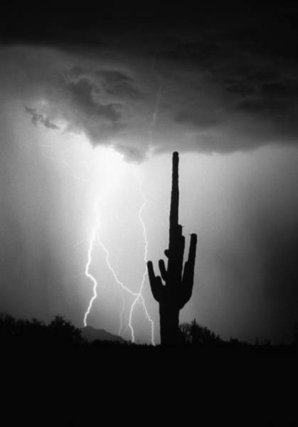 Photograph - Intertwine Lightning Bolts And Saguaro Bw by James BO Insogna