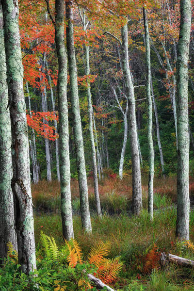 Photograph - Into The Autumn Forest by Bill Wakeley