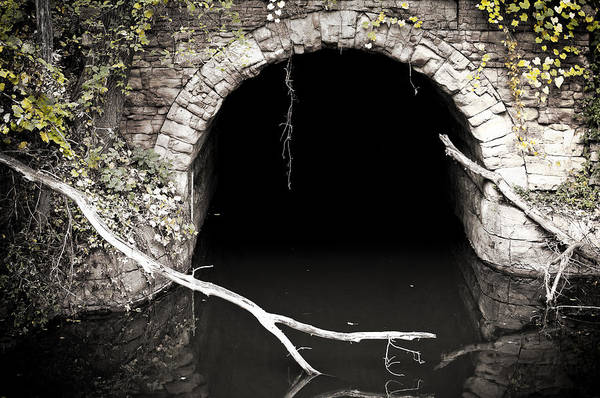 Into The Woods Wall Art - Photograph - Into The Black by Matthew Blum