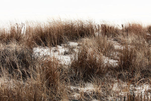 Down The Shore Photograph - Into The Dune by John Rizzuto