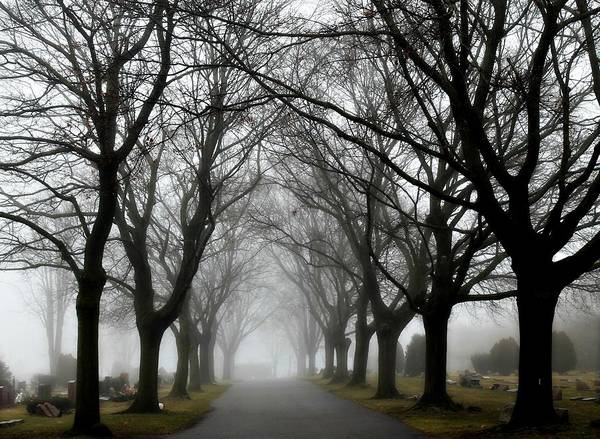 Photograph - Into The Fog by Rebecca Frank