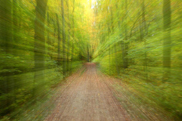 Photograph - Into The Forest by Rob Huntley