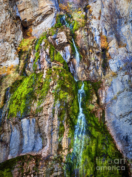 Photograph - Into The Green by David Millenheft