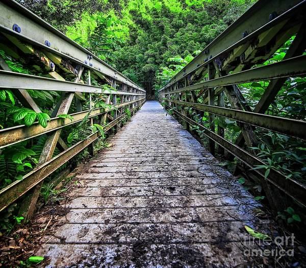 Bamboo Photograph - Into The Jungle  by Edward Fielding