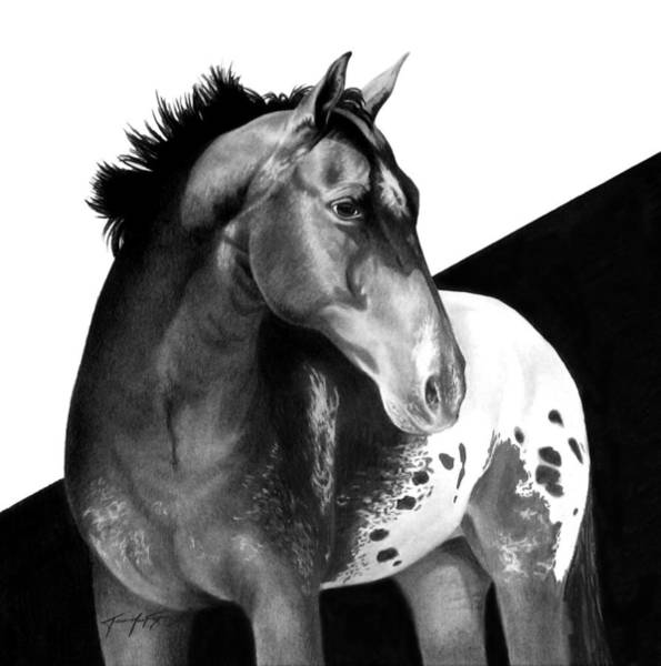Appaloosa Drawing - Into The Light by Jennifer Fox