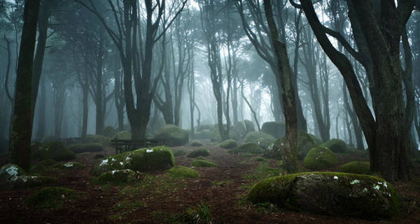 Sintra Photograph - Into The Light by Jorge Maia