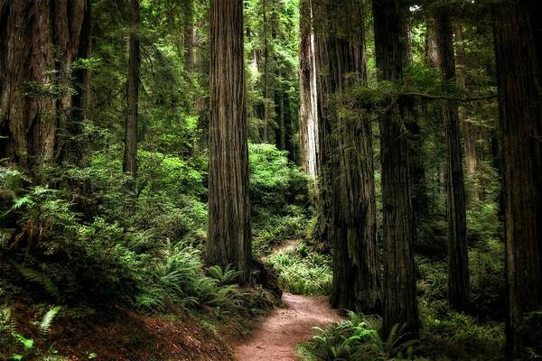 Photograph - Into The Magical Forest by Michelle Calkins