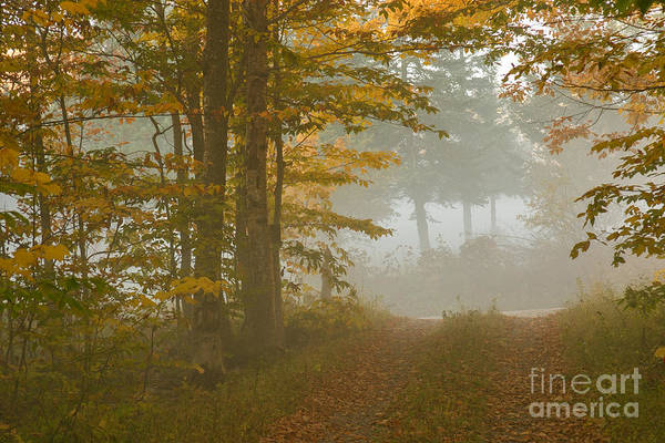 Photograph - Into The Mist by Charles Kozierok
