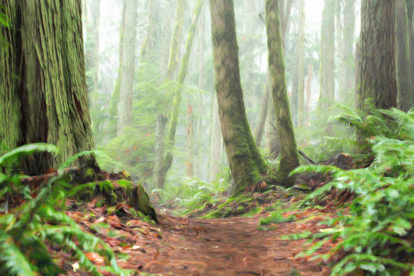 Photograph - Into The Mist by Mary Jo Allen