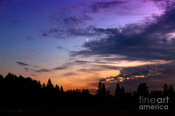 Photograph - Into The Night by Beve Brown-Clark Photography