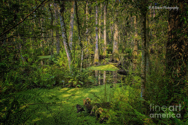 Photograph - Into The Swamp by Barbara Bowen