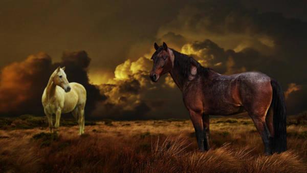 Palomino Horse Mixed Media - Into The Wild by Davandra Cribbie