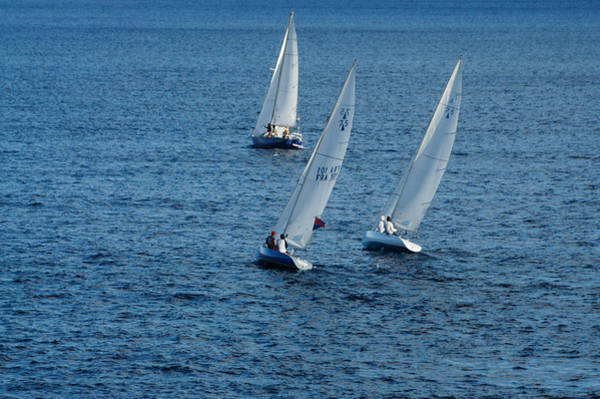 Photograph - Into The Wind - Crisp White Sails On Blue by Georgia Mizuleva
