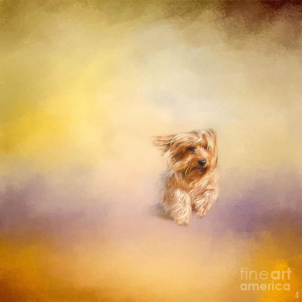 Photograph - Into The Wind by Jai Johnson