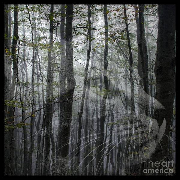 Tribute Digital Art - Into The Woods by Elizabeth McTaggart