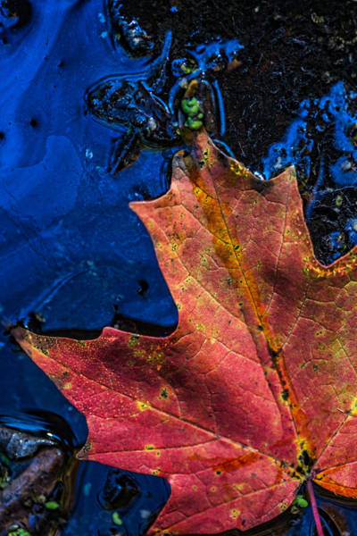 Photograph - Intricate Decay by Dale Kincaid