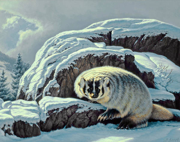 Yellowstone Wall Art - Painting - Intrusion -  Badger by Paul Krapf