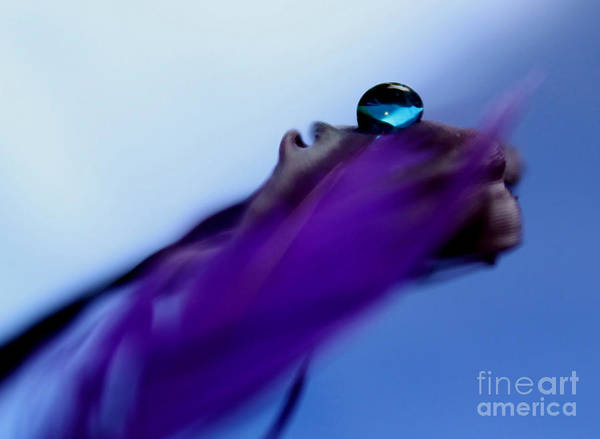 Sophisticated Photograph - Intuition by Krissy Katsimbras
