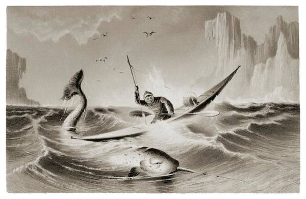 Sea Hunt Photograph - Inuit Hunting A Narwhal In A Kayak. by David Parker/science Photo Library