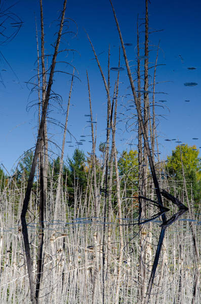 Photograph - Inverted Dead Reflections. by Rob Huntley